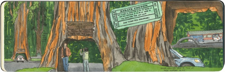 Drive-Thru Tree sketch by Chandler O'Leary