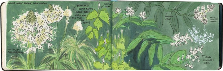 Wildflower sketches by Chandler O'Leary