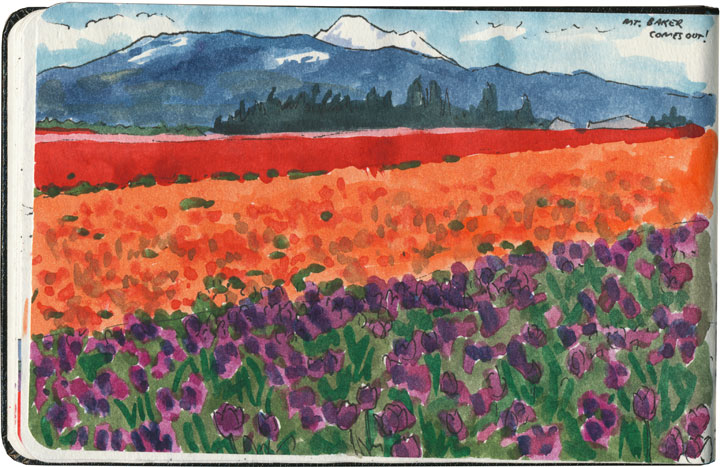 Skagit Valley Tulip Festival sketch by Chandler O'Leary