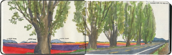 Skagit Valley tulip fields sketch by Chandler O'Leary