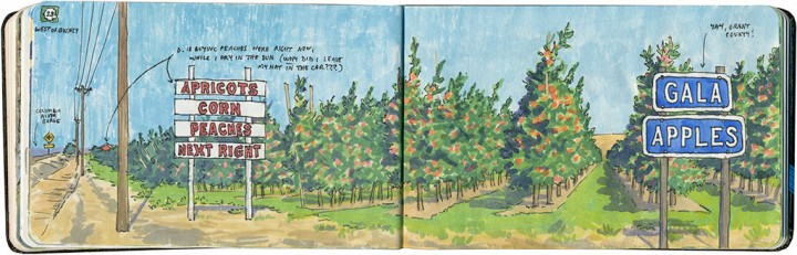 Apple orchard sketch by Chandler O'Leary