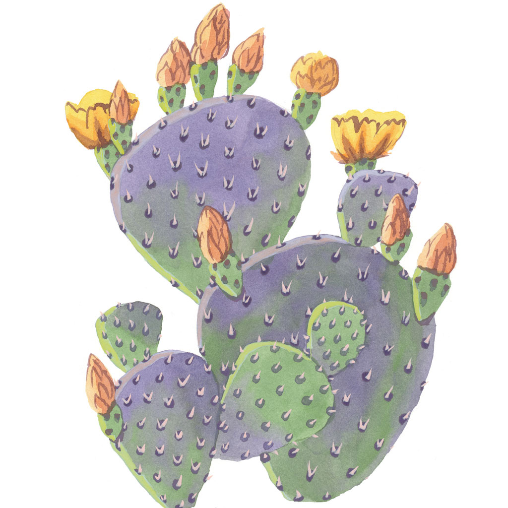 purple prickly pear print � drawn the road again