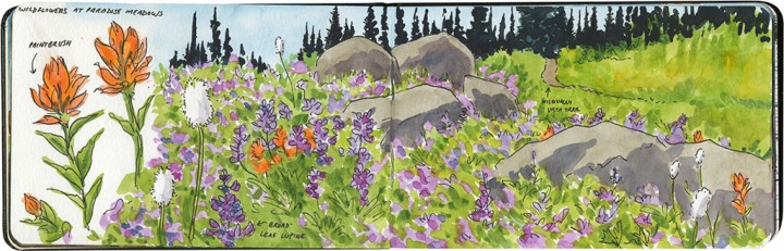 Mt. Rainier wildflowers sketch by Chandler O'Leary
