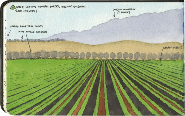 California carrot field sketch by Chandler O'Leary
