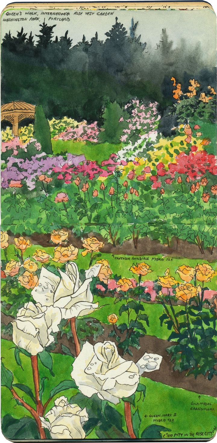 Portland Rose Garden sketch by Chandler O'Leary