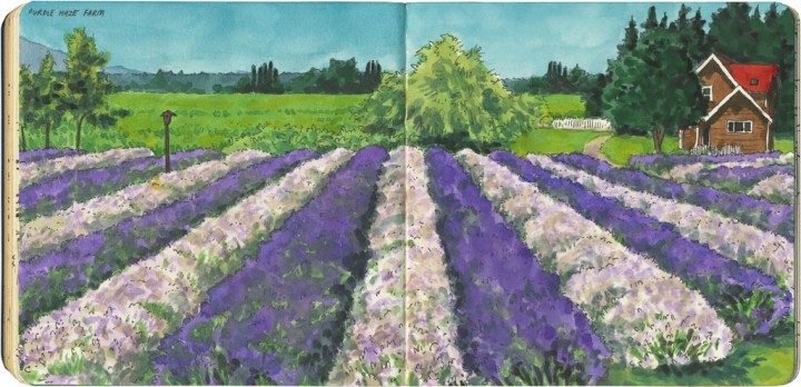 Lavender farm sketch by Chandler O'Leary