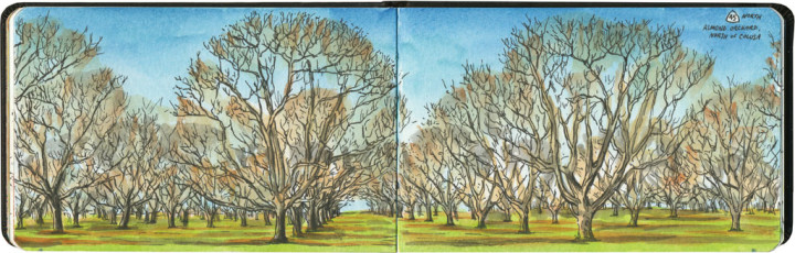 California almond orchard sketch by Chandler O'Leary