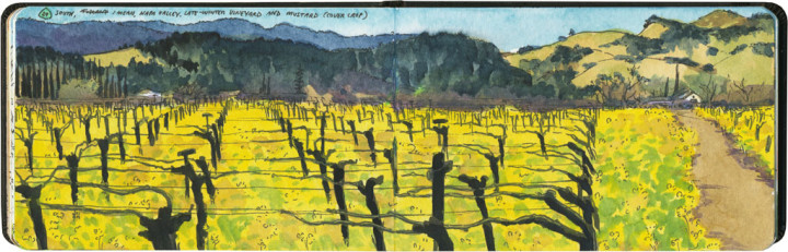Napa Valley sketch by Chandler O'Leary