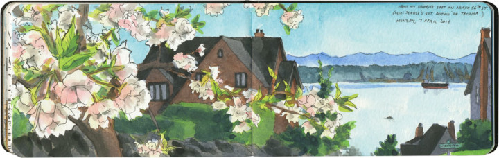 Tacoma cherry blossoms sketch by Chandler O'Leary