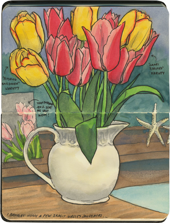 Tulip bouquet sketch by Chandler O'Leary