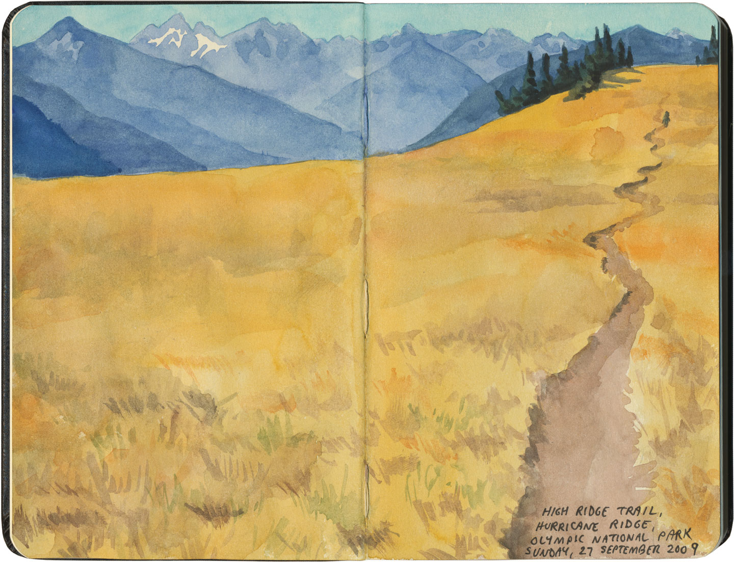 Olympic National Park sketch by Chandler O'Leary