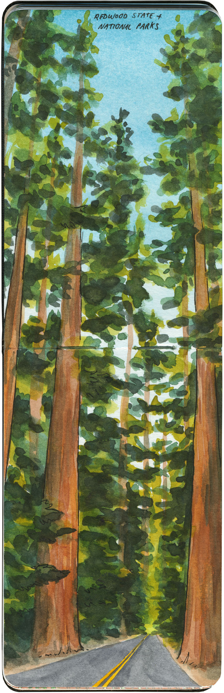 Redwood National Park sketch by Chandler O'Leary
