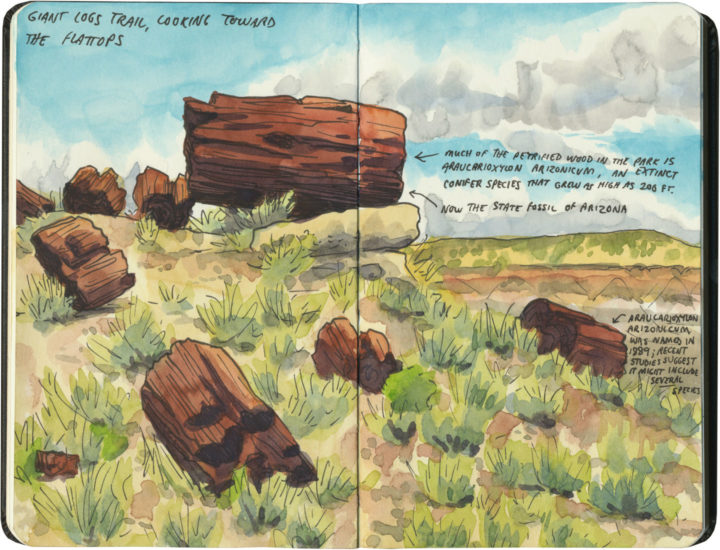 Petrified Forest National Park sketch by Chandler O'Leary