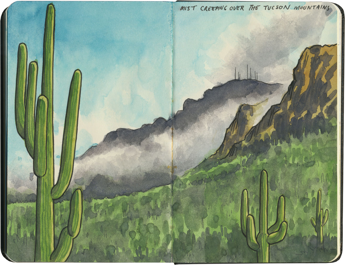 Saguaro National Park sketch by Chandler O'Leary