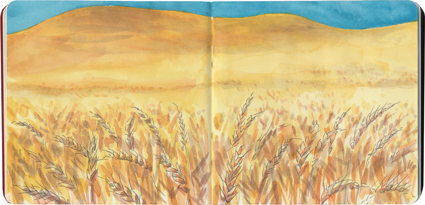 Palouse wheat field (autumn) sketch by Chandler O'Leary
