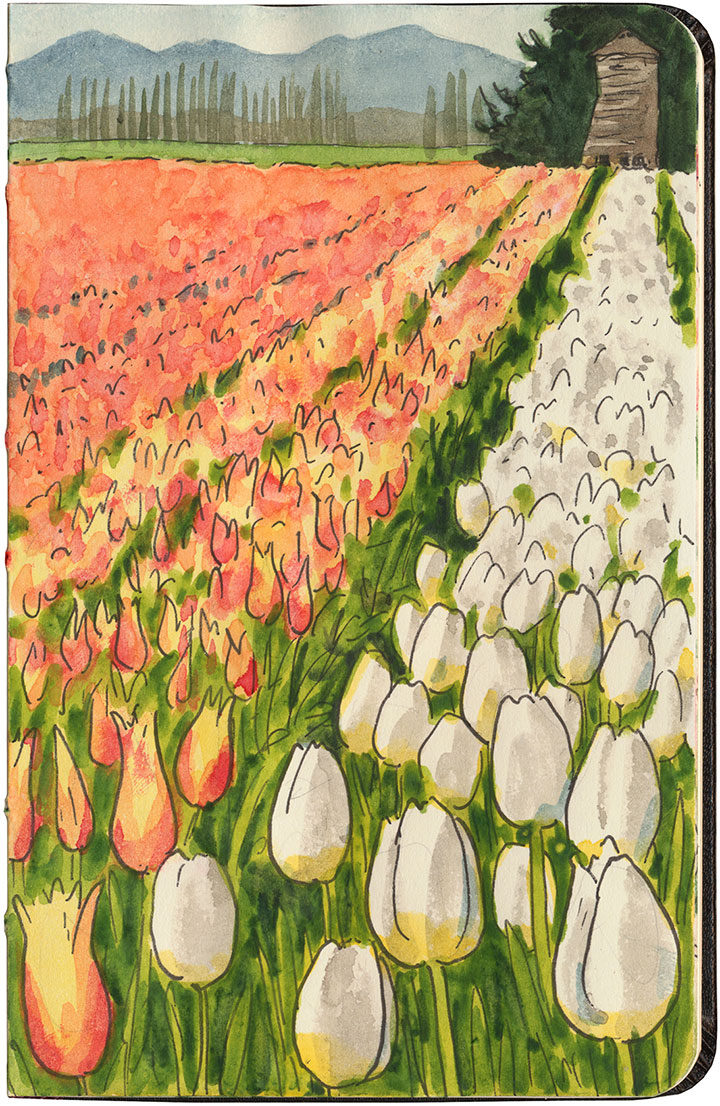 Skagit Valley tulip field sketch by Chandler O'Leary